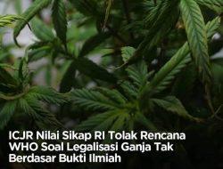 Tolak wacana pelegalan Ganja, Indonesia Dikritik ICJR